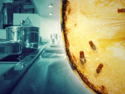 Фруктовые мошки: откуда они берутся в квартире, как появляются на фруктах и как от них избавиться?